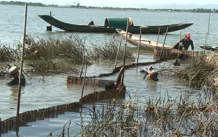 Quảng Điền trúng đậm cá dìa trên phá Tam Giang