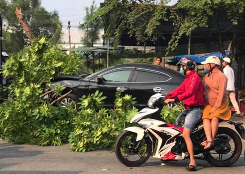 Ôtô đâm 3 xe máy, húc gãy cây xanh ở Huế