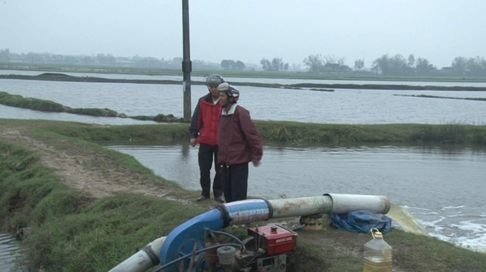 Triều cường khiến bờ biển sạt lở và 32 ha lúa gieo sạ bị ngập