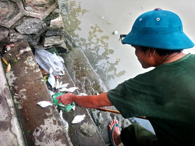 Cá chết trên sông An Cựu sau mưa lớn