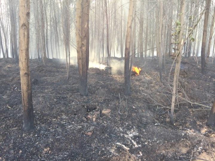 Cháy 6 ha rừng ở Phong Điền
