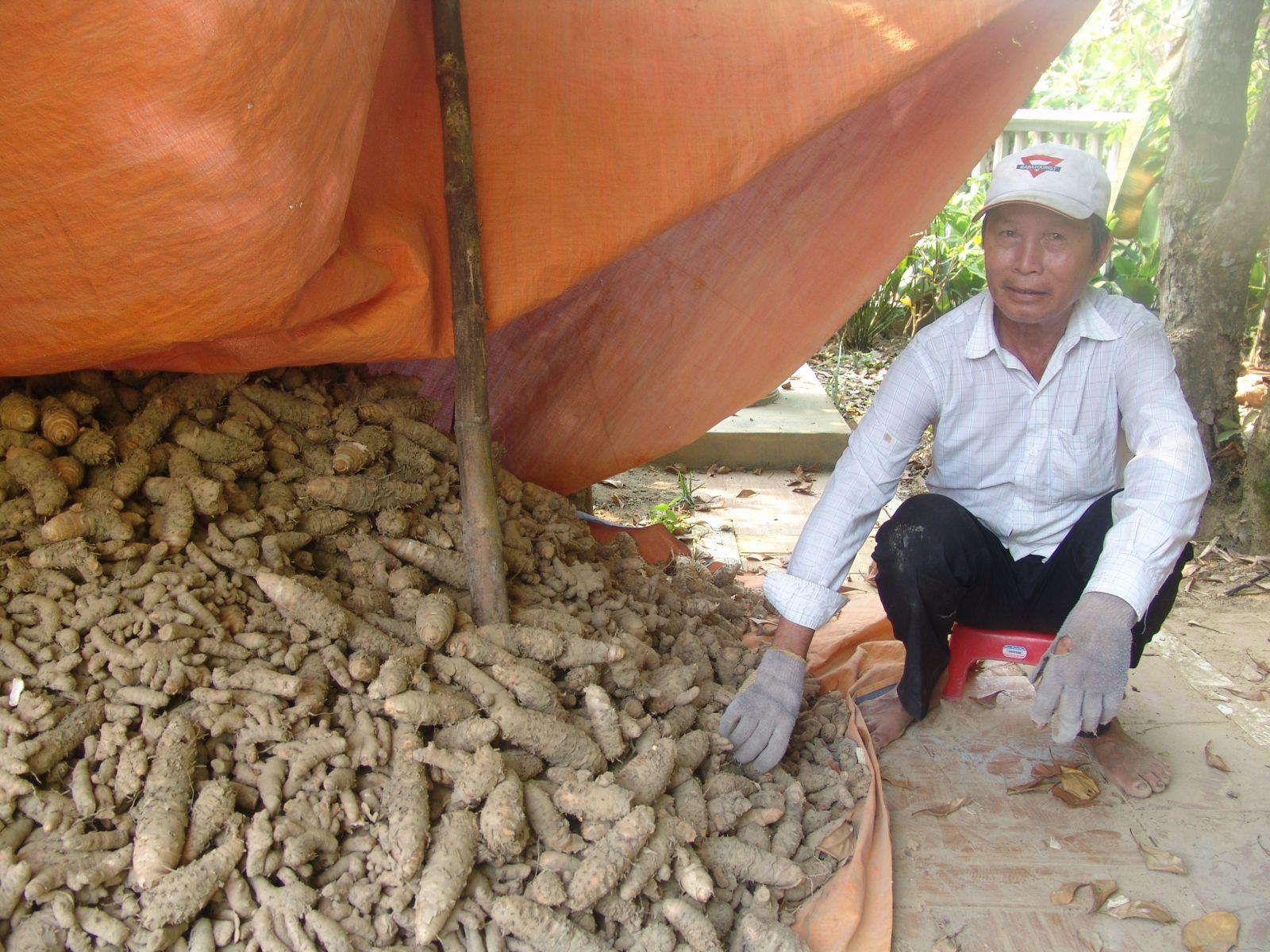 Người dân Quảng Phú: Lo lắng vì nghệ chưa được thu mua