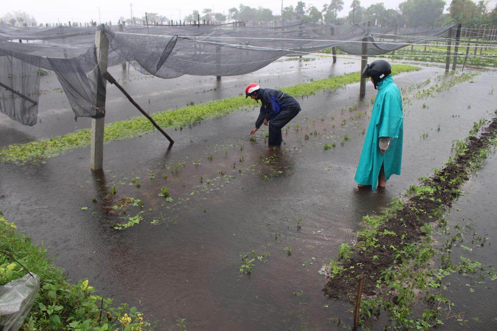 Nhiều thiệt hại ở vùng Ngũ Điền do mưa lũ