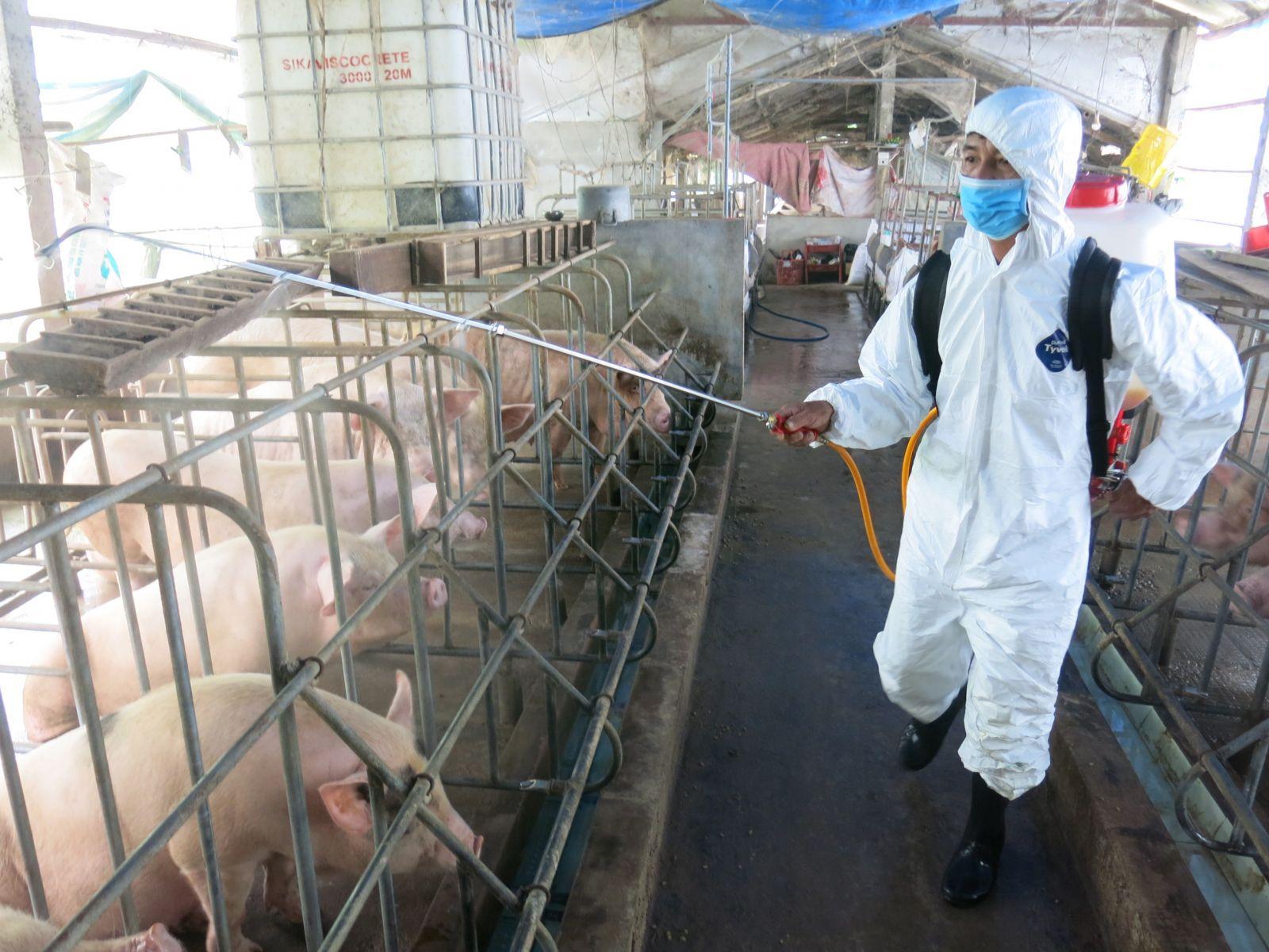 Phát hiện thêm ổ dịch tả lợn Châu Phi tại xã Phong Sơn