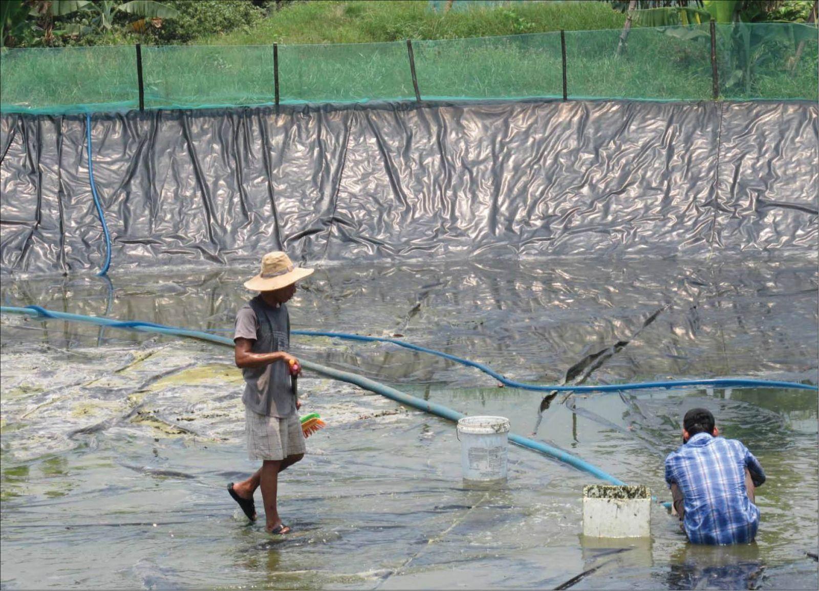 Hói Mít, Hói Dừa: Làm giàu không còn là giấc mơ