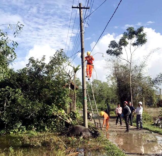 Rò điện làm chết trâu ở Lộc Tiến