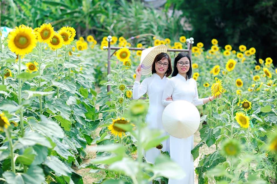 Khu vườn hoa mặt trời giữa lòng thành phố