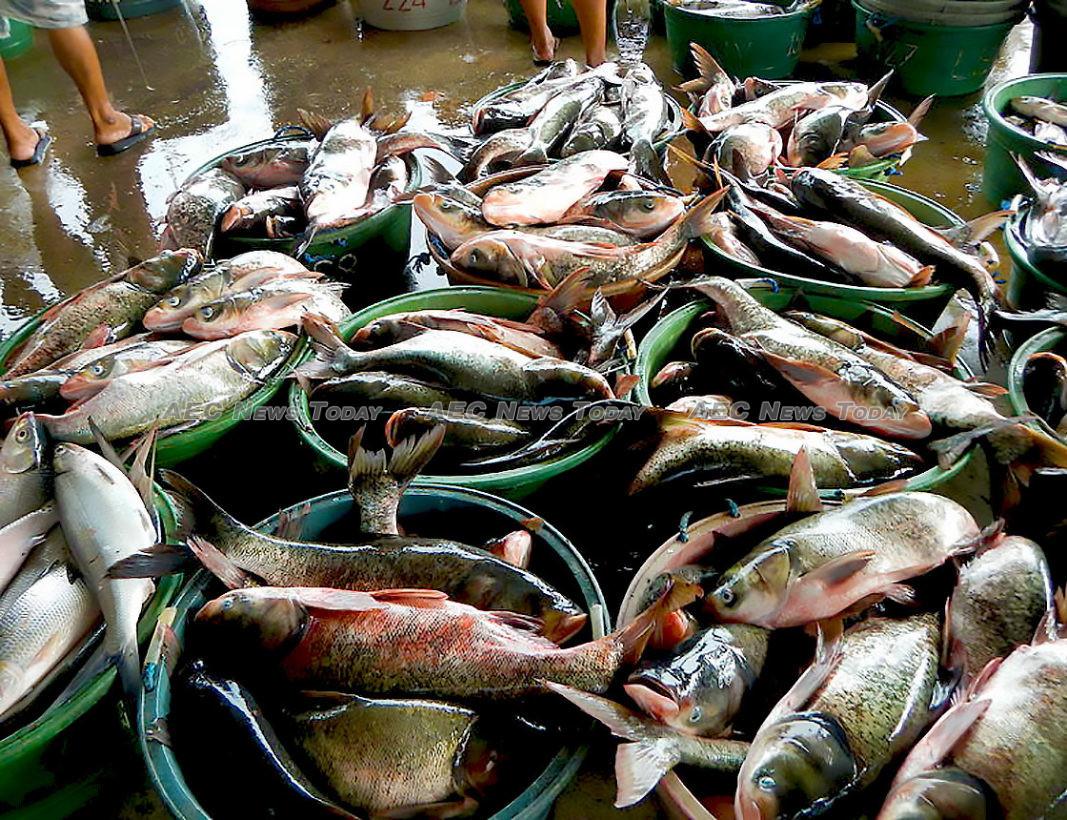 Ngành đánh bắt cá của Philippines đối mặt nguy cơ biến mất vào năm 2050