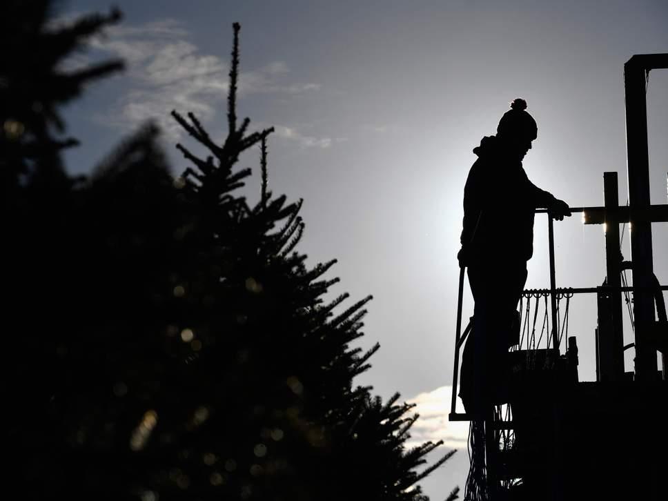 Người Anh có thể đón Giáng sinh mà không có cây thông Noel