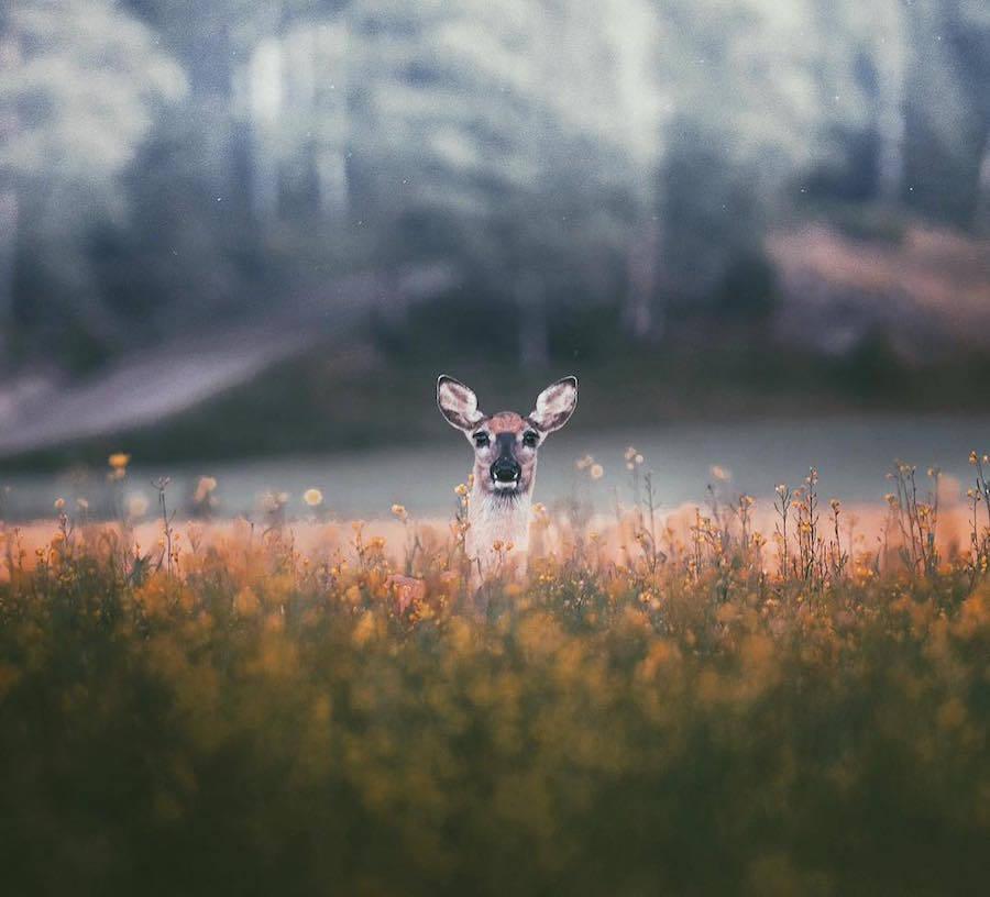 Thế giới động vật tuyệt đẹp qua ống kính Konsta Punkka