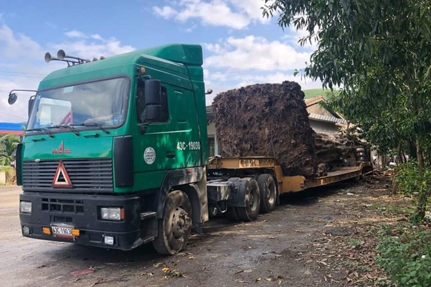 Thừa Thiên - Huế: Bắt giữ xe đầu kéo chở cây