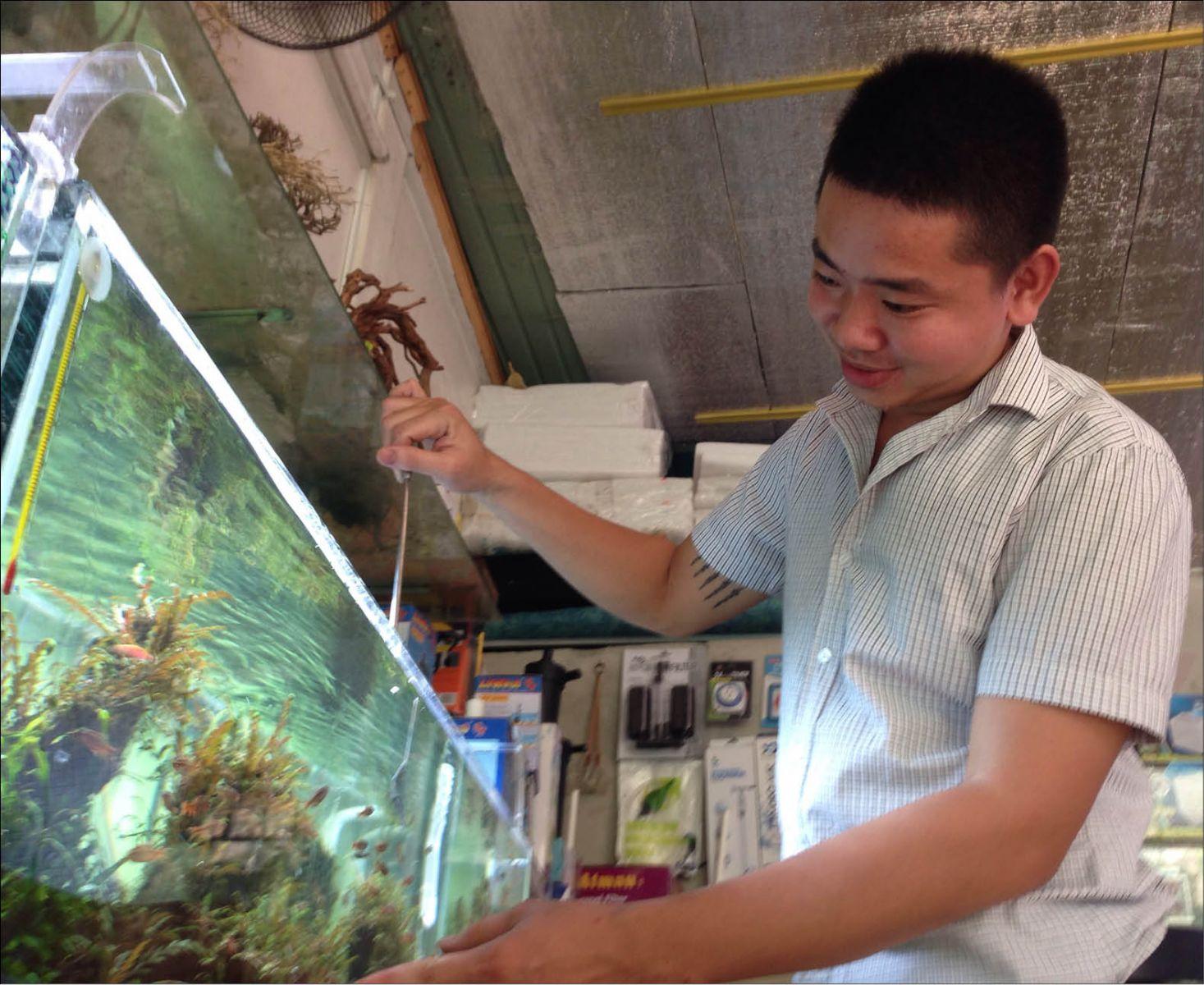 Nghề làm bể cá thủy sinh