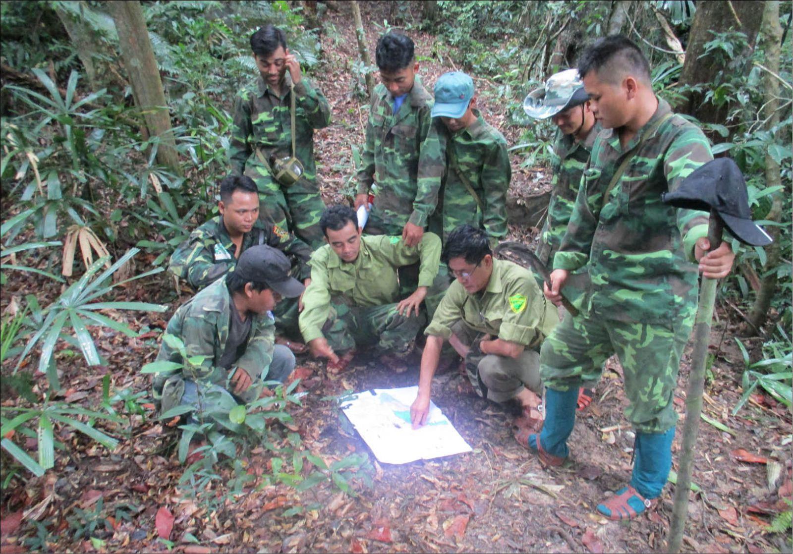 Ứng dụng công nghệ giám sát, quản lý rừng hiện đại: Giảm diện tích rừng bị chặt phá, lấn chiếm